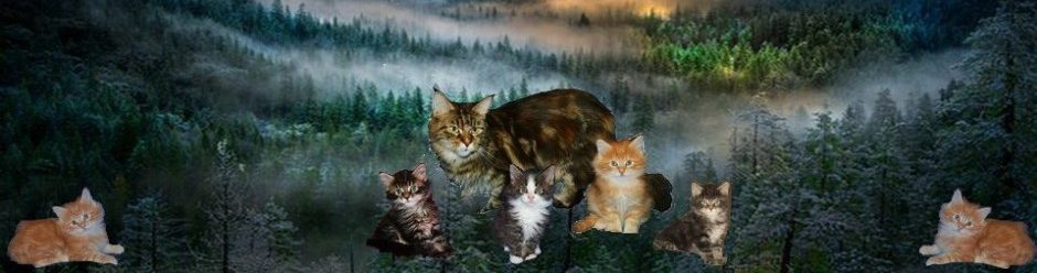 Питомник котят мэйн кун Аргун К*