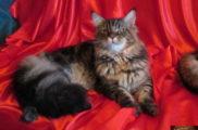 Котята Ж buleha (50)